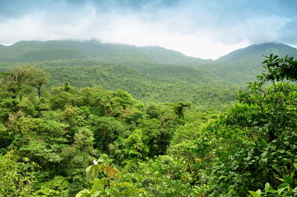 Dschungel Hintergrundbild mittlere Grösse